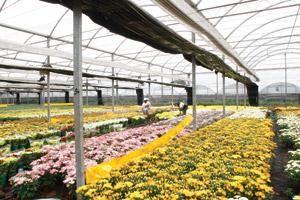 Plástico Moderno, Plasticultura - Plásticos propõem aos agricultores explorar seus benefícios além do simples abrigo do tipo guarda-chuva
