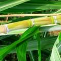 Perspectivas 2016 - Álcool: Gasolina cara permitiu avanço do etanol, mas endividamento alto preocupa...